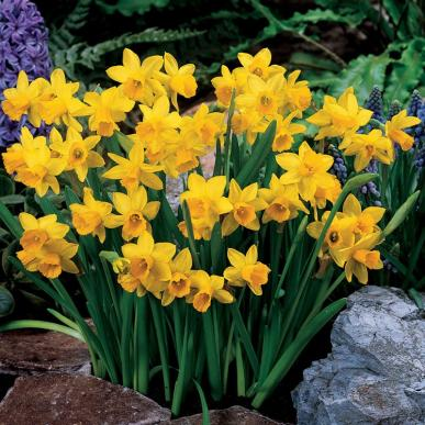 alles wat u moet weten over bloembollen bindels tuinen. Black Bedroom Furniture Sets. Home Design Ideas