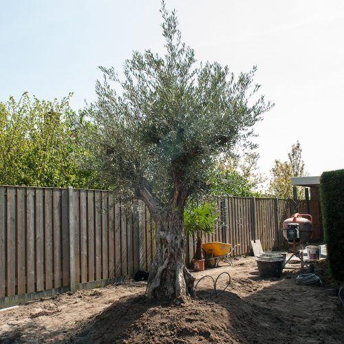Mediterraanse tuin Milsbeek
