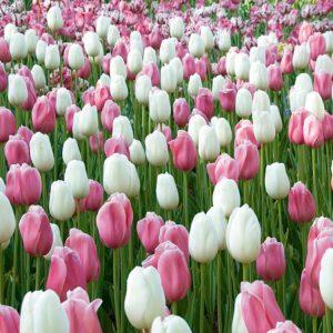 12 prachtige bloembolmixen in beeld gebracht