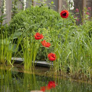tuinvoorbeelden vijver