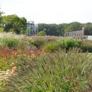 Beplantingsplan voor de kleine tuin