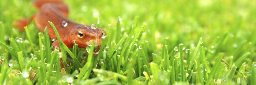 biologisch gazononderhoud