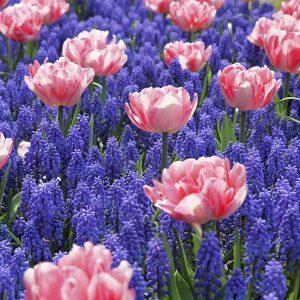 12 bloembolmixen voor u op een rijtje