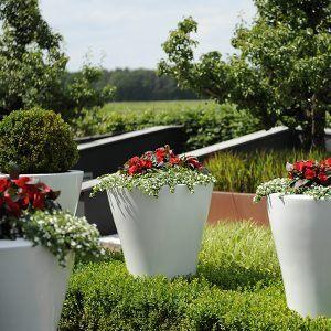 Juni, de bloeimaand. Tips, adviezen en ideeën