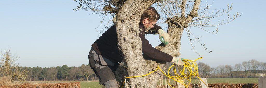 olijfboom beschermen tegen vorst