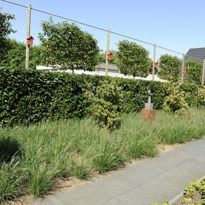 tuinvoorbeelden lounge tuin
