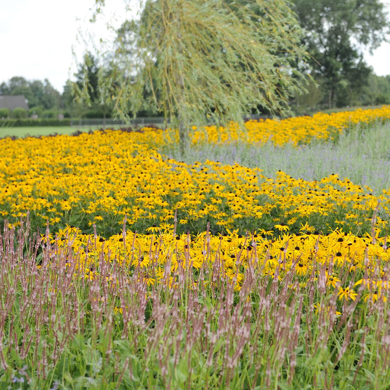 Een onderhoudsarme tuin zonder grind bindels tuinen - Tuin grind decoratief ...