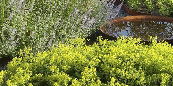Een onderhoudsvriendelijke tuin mét planten