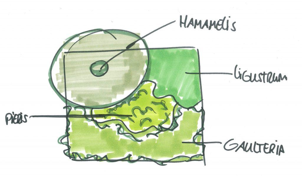 Beplantingsplan Gaultheria procumbens