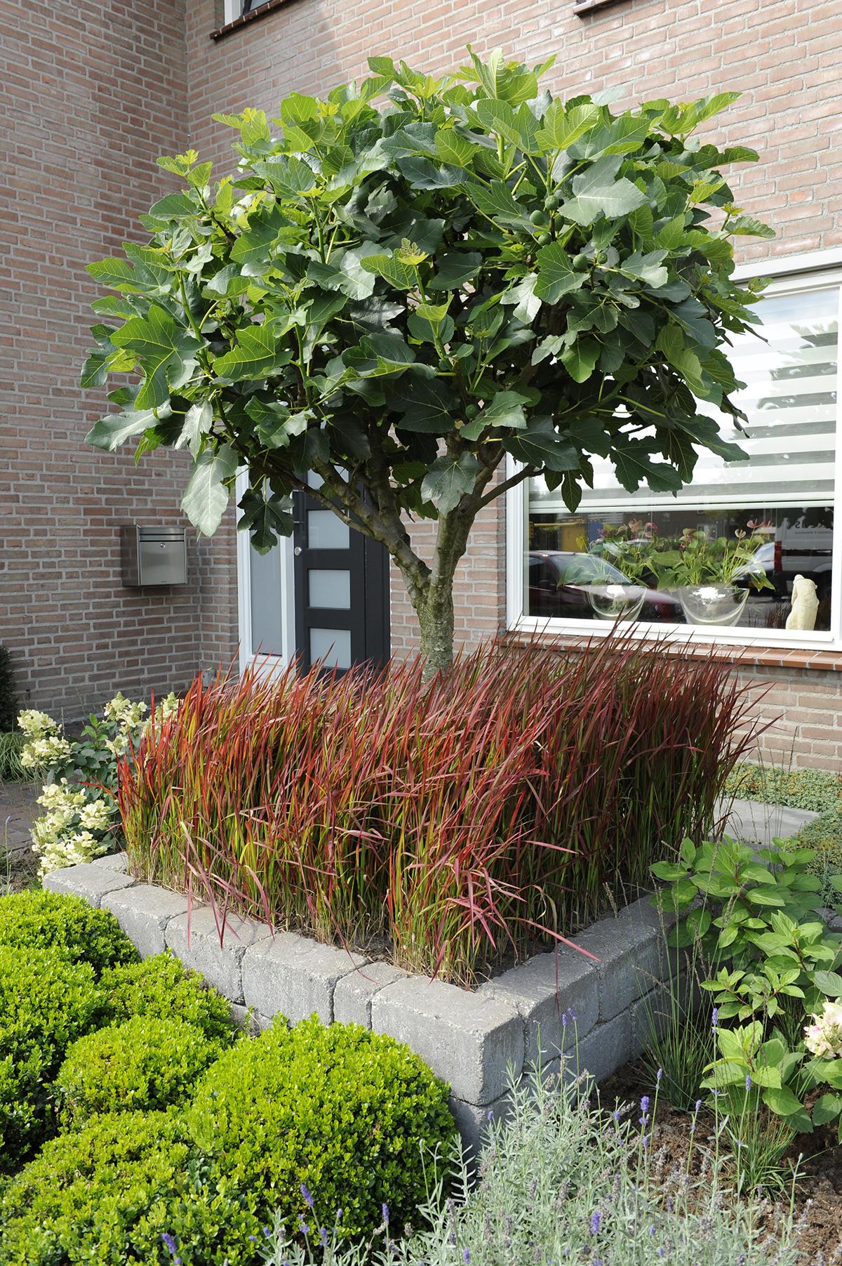 Voortuin bepalend voor het aangezicht van uw woning for Tuinvoorbeelden voor kleine tuin